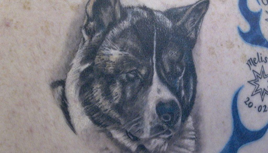 husky portrait tattoo Tauranga New Zealand
